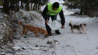 Karda sokak hayvanlarını elleriyle beslediler