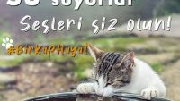 SICAK HAVALARDA HAYVANLARA SU VERİN!..