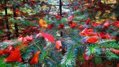 Kazdağları'nda görsel şölen! Her mevsim başka renk giyiniyor