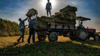 Tarım ve Hayvancılık Yatırımcılarında Doğru Adres Balıkesir…