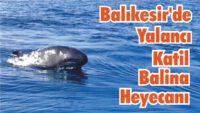 BALIKESİR'DE YALANCI KATİL BALİNA HEYECANI