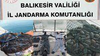 Jandarmadan kaçak deniz patlıcanı operasyonu!