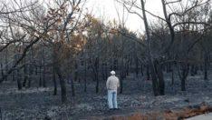 Ayvalık'ta ormanlık alan yandı; kara tablo sabah ortaya çıktı