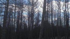 İvrindi İlçemizdeki Orman Yangını