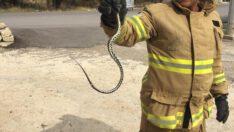 İtfaiyecilerin yılan operasyonu