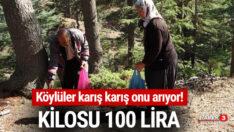 Köylüler karış karış onu arıyor! Kilosu 100 TL