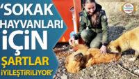 'Sokak hayvanları için şartlar iyileştiriliyor'