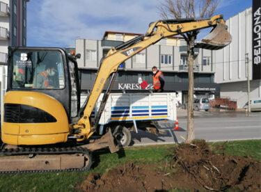 Rüzgâr Caddesi'ndeki Ağaçlar Yenilenecek