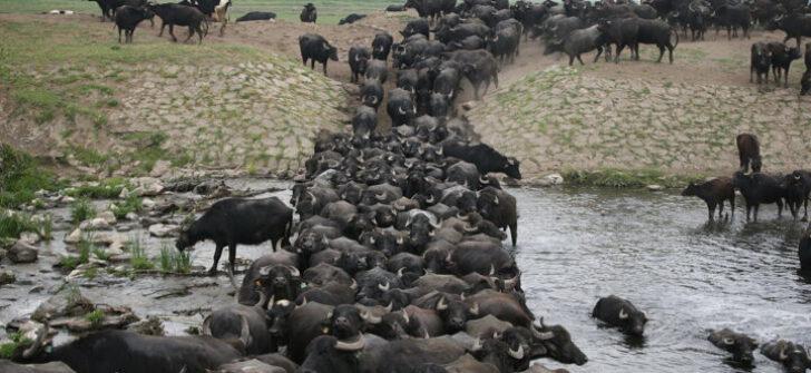 Serengeti değil Balıkesir..(Yakupköy, Balıklı, Karamanköy, Halalca, Ayşebacı ve Bostancı)