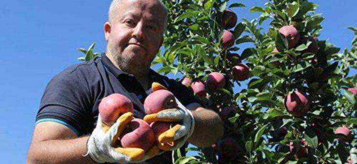 Dalında 2,5 liraya alınan elmanın marketlerde 8 liraya satılmasına tepki