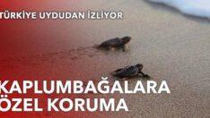 Kaplumbağalara özel koruma