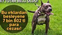 Tehlike arz eden 4 köpek ırkını besleyene 7 bin 802 TL para cezası