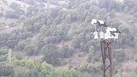 Yüzlerce leylek 12 saatlik elektrik kesintisine neden oldu