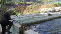 Balık çiftliğinden somon balıkları çalındı