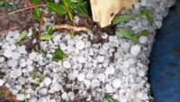 Sındırgı'yı sağanak yağış ve dolu vurdu