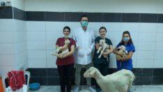 BAÜN, Veteriner Fakültesiyle Bölge Hayvancılığına Güç Katıyor
