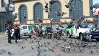 Büyükşehir Belediyesi Hayvan Durum İzleme Timi