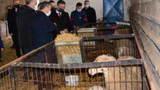 Rektör İlter KUŞ Hayvancılık Araştırma ve Uygulama Merkezinde incelemelerde bulundu.
