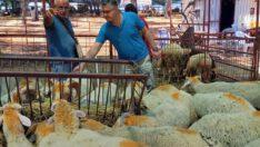Kurbanlık Hayvan pazar yerlerindeki denetimler aralıksız devam ediyor..