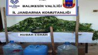 (42) kök kenevir bitkisi ve (755) gram kubar esrar maddesi ele geçirildi