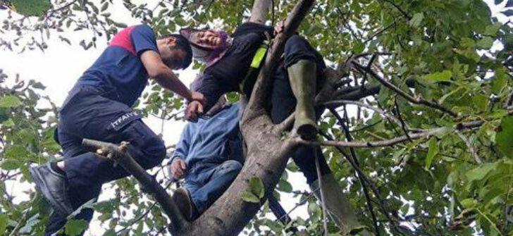 Ceviz toplamak için çıktığı ağaçta mahsur kaldı: AFAD kurtardı